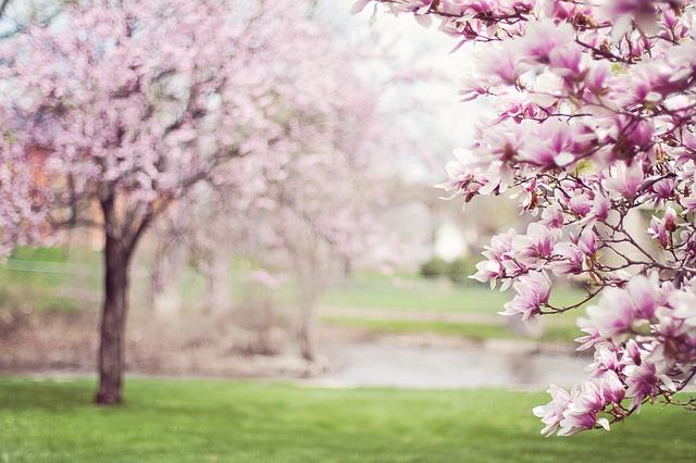 strom magnolie