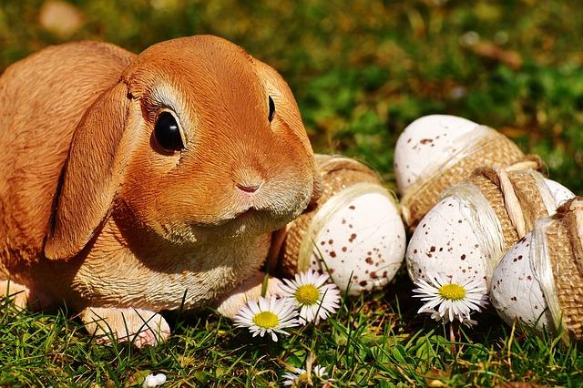 zajíček s vejci